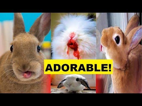 adorable-bunnies-compilation-2019-|-baby-bunnies-2019-|-cutest-bunnies-2019