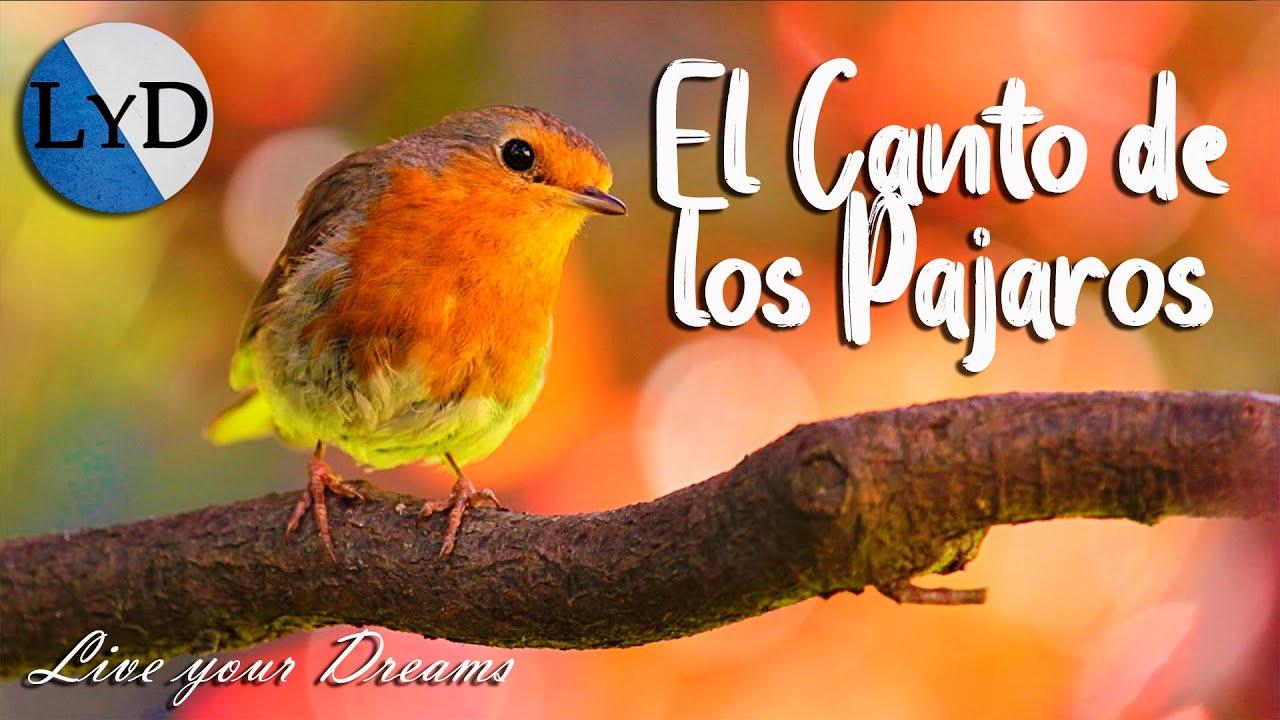4 Horas De Sonidos Relajantes De Pajaros Cantando El Canto De Las