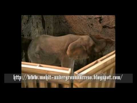Breaking the Magician's Code Magic's Biggest Secrets Finally Revealed  Vanishing Elephant.flv