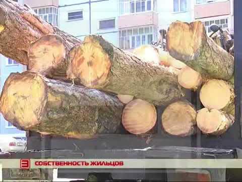 Как законно воровать лес не выезжая за город!