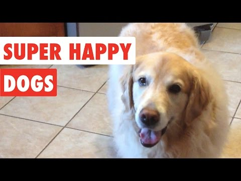 Super Happy Dogs | Funny Dog Video Compilation 2017