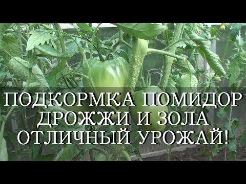 Как правильно подкормить помидоры дрожжами видео