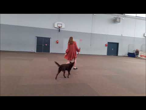 Dog Dancing - 2nd Competition 15 04 18