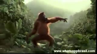 videos whatsapp macaco dançando oragotango
