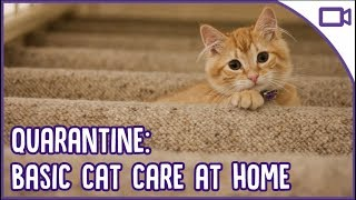 Quarantine Cat Care  Basic at Home Cat Care 101!