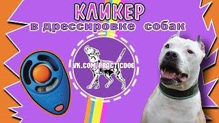 Кликер в дрессировке собак | питбуль | дрессировка собак