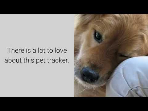 Tractive GPS Pet Tracker - Pros, Cons & Reviews Of Tractive Pet Tracker