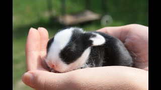 Preview of stream Kaniner - baby rabbits
