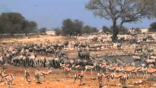 Namibia safari highlights (Skeleton Coast, Namib Naukluft and Etosha National park)