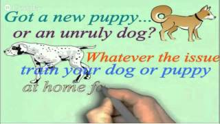 Online Dog or Puppy Training for Your Golden Retriever
