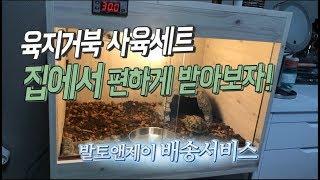 파충류 키우기 육지거북 배송서비스 후기  동헤르만 육지…