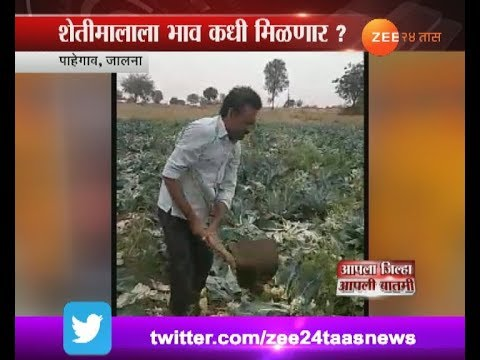 Jalna | Farmer Destroying Farm For No Price To Crops