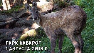ПАРК КАБАРОГ 1 АВГУСТА 2018 Г.