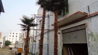 我的幻灯片演示(Пальмы искусственные!Пальмы это вечнозеленые декоративные растения.Используемые для создания тропическо..., 2014-05-09T00:56:55.000Z)