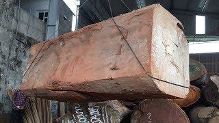 Chainsaw Giant Wood | Extreme Fast Chainsaw Cutting Large Tree Easy | Beautiful Wood
