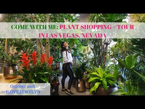 Come with me: Plant shopping + tour | Las Vegas | October 2018 | ILOVEJEWELYN