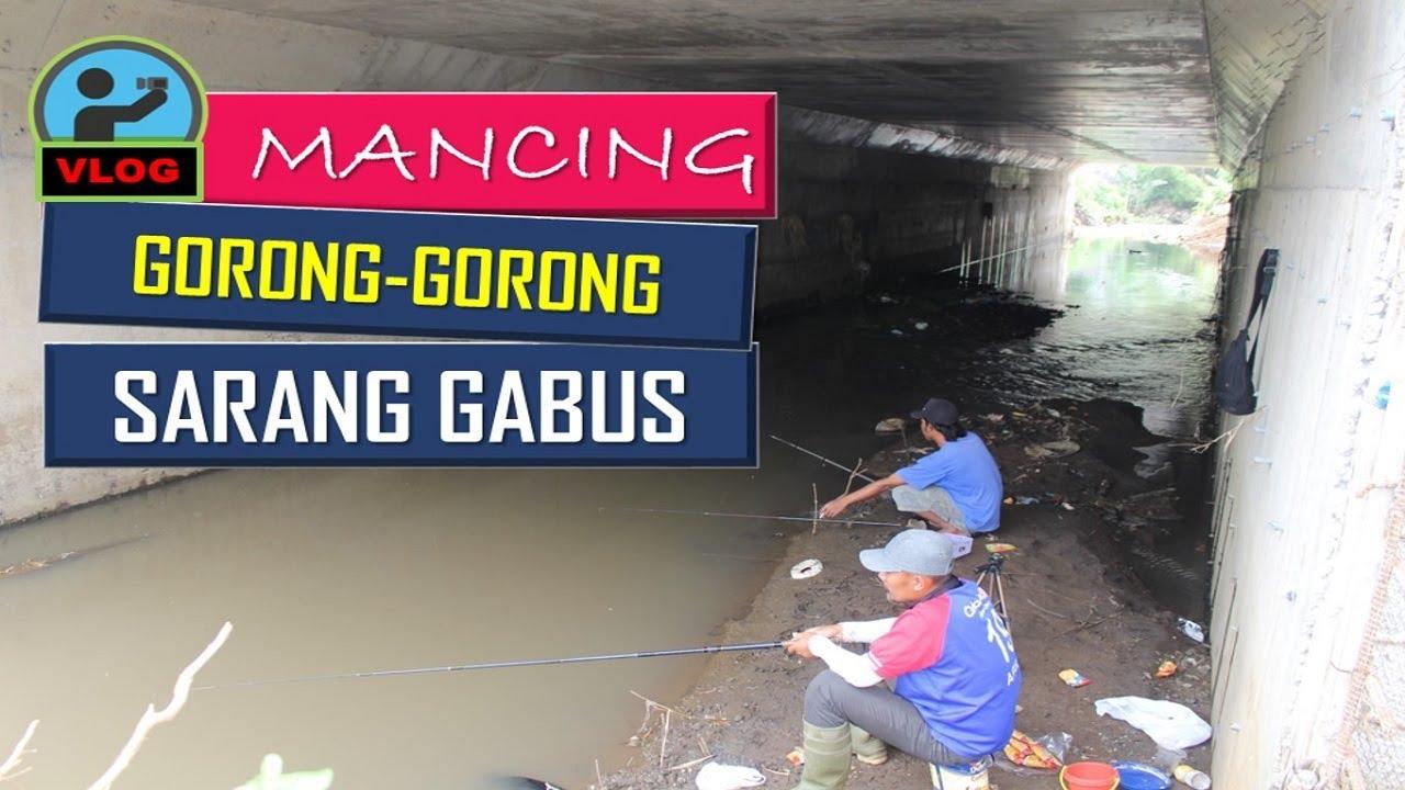 Mancing di sungai kecil bawah gorong gorong tol banyak ikan gabus - YouTube