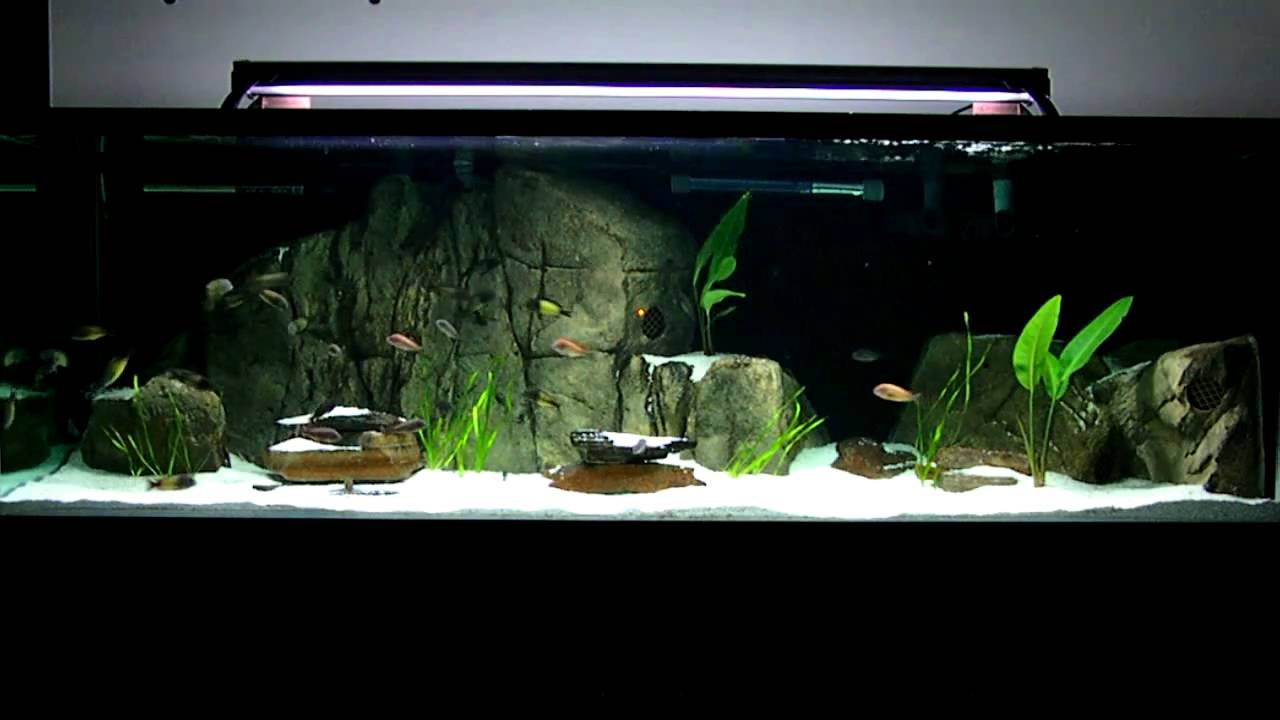 3d aquarium fish tank background feature rock - 180 Gallon Tropheus Moorii And Ikola Tank With Universal Rocks 3d Feature Rocks Youtube