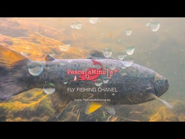 Bienvenido al canal de pesca a mosca de PescataMinuta.es