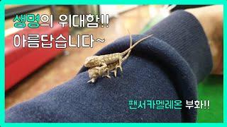 [해달구TV] 팬서카멜레온 암빌로비레드바 부화소식!!