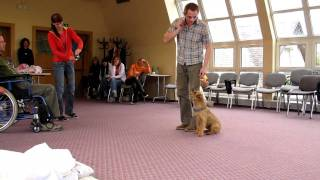 Border Terrier Canistherapy Test