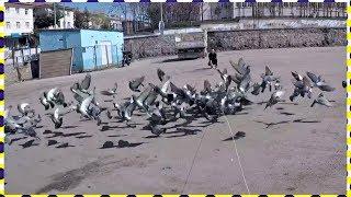 En Kolay Kuş Yakalama Yöntemi %100 Garanti - bird capture method warranty