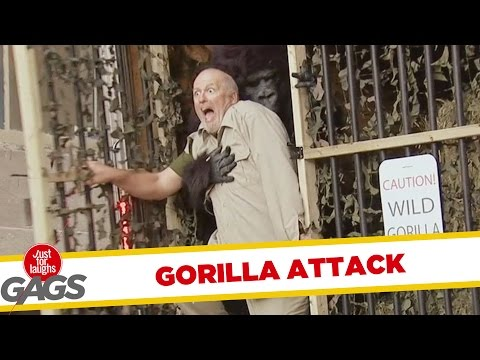 Wild Gorilla Attack
