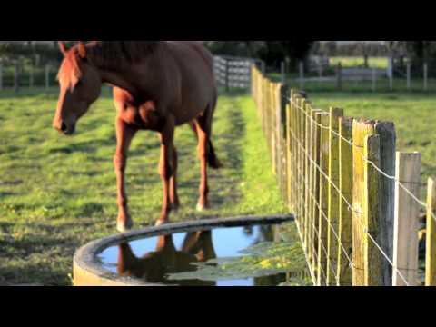 Welcome to Ellie O'Brien Horsemanship