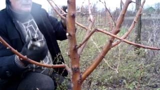 Обрезка и формировка персика(, 2015-04-20T20:33:14.000Z)