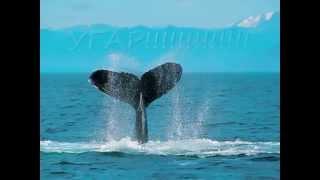 Фильм про кита!