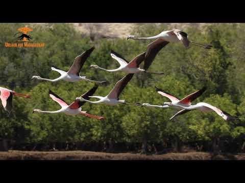 Flamingos im Süden von Madagaskar