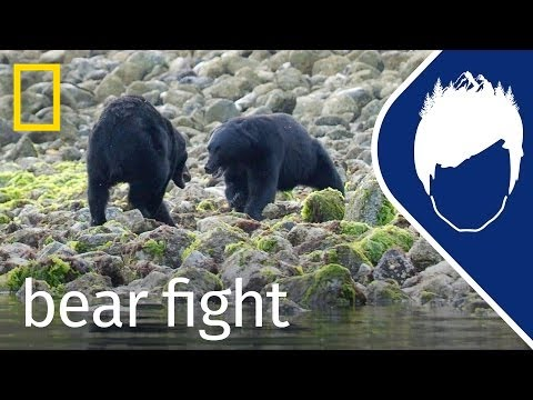 Bear Fights to Save Her Cubs (Episode 8) | wild_life with bertie gregory