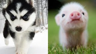 Cute and Funny Animals Videos Compilation - Funny and Cute Animals #2
