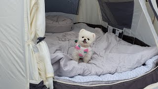 Camping with puppies