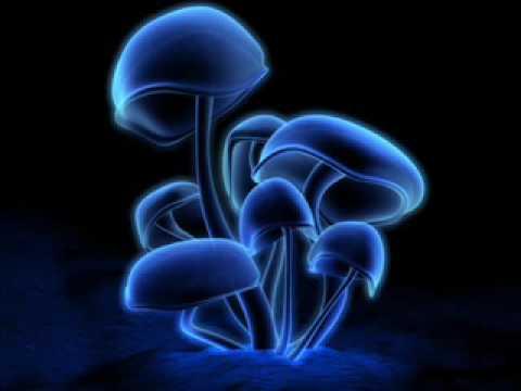 1200 micrograms- magic mushrooms