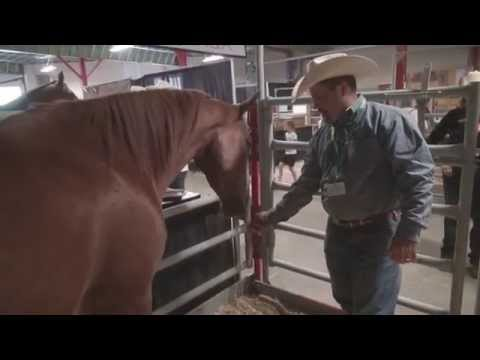 Horse Breed 101 - The American Quarter Horse