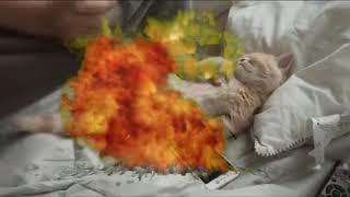 Funny Fortnite Cat Video Roblox #V-Bucks (Black ops 4 Montage)