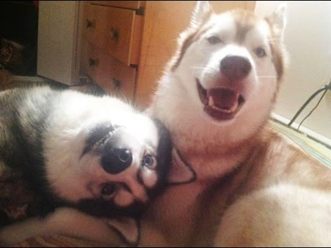 Cute Dogs Trick ' Who's your best friend' Videos Compilation -  Best funny dog vines 2016