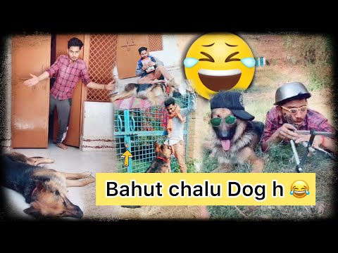 Ye Bahut chalu Dog h #funnydog | Akash comedy with dog | TikTok viral dog videos