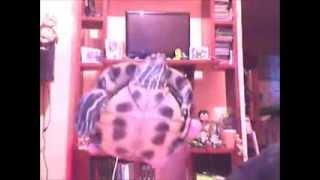 Cuidados básicos para una tortuga (Trachemys Scripta Elegans)
