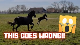 This is going wrong. But why?? | Friesian Horses