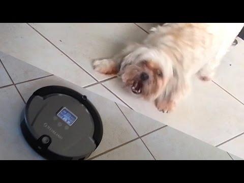 Roomba Attacks Dog