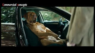 Top 10 The Best and Funny dogs car commercials