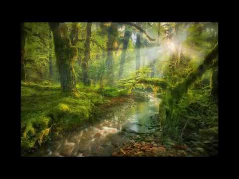 Schne NaturBilder mit Musik  YouTube