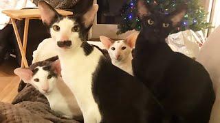 Reality Honks: The cat's holiday recap!