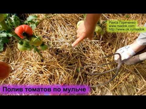 Полив томатов по мульче