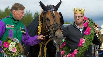 Nordic King 2018 - Costello