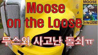 [CANADA TRUCKER] [Vlog #128] Moose on the Loose !!!