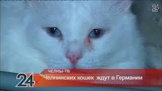 Челнинских кошек  ждут в Германии