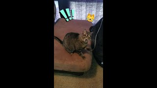 🙀 This drives her crazy!! 🐾🎈 | Funny cat video 😹